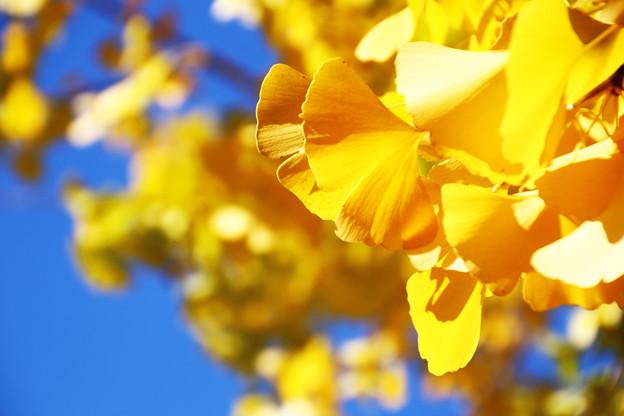 綺麗な黄色