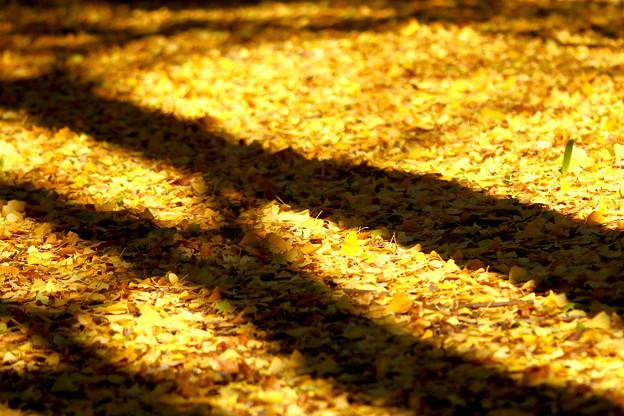 並木の足元