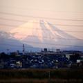 Photos: 初富士
