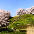 Photos: 古墳の春(2枚合成)