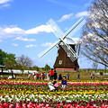 Photos: 春景色(2枚合成)