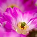 Photos: サボテンの花