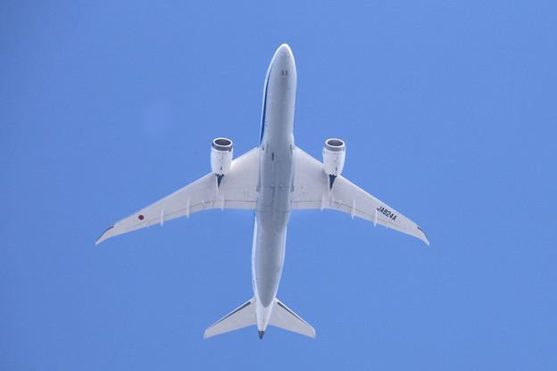 JA824A  ANA   787-8 Dreamliner