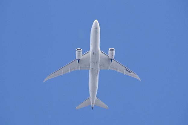 JA846J  JAL  787-8 Dreamliner