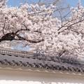 Photos: 白波