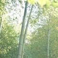 実家の竹林