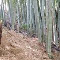 Photos: 竹の子