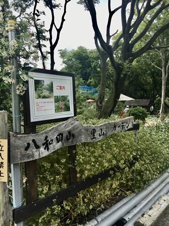 八和田山里山ガーデンコンサート2020ありがとうございました