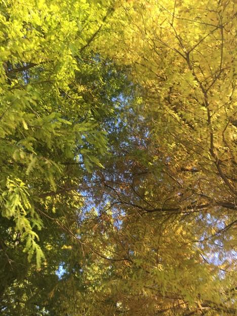 秋の歌をライブ配信Part2-19