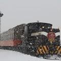 写真: 津軽!冬の風物詩