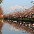 お濠に写り込む岩木山と桜