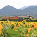 写真: 夏の五能線と向日葵畑