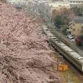 Photos: 横浜線沿線の桜