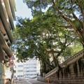 写真: 樹の壁
