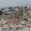 Photos: 波打ち際の猫