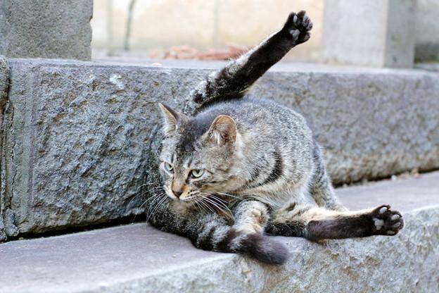 チビちゃんも立派な成猫に!