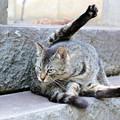 Photos: チビちゃんも立派な成猫に!