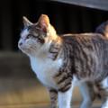 野良猫のお正月1月1日