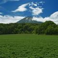 Photos: 開花前のジャガイモ畑を前景に