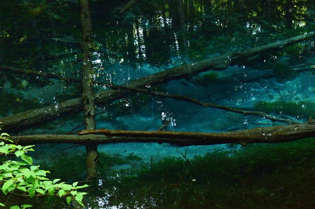 Photos: 神の子池2