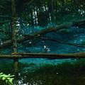 神の子池2