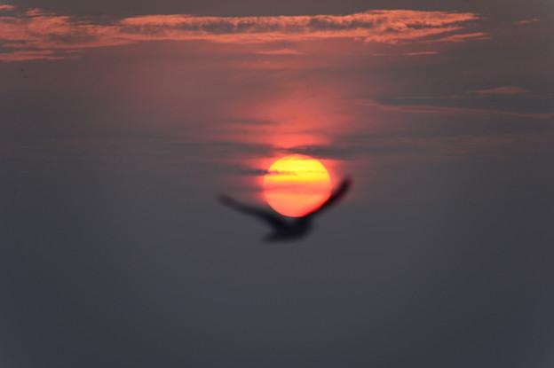 夕日が背中を押してくる