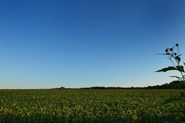 半月とひまわりの丘