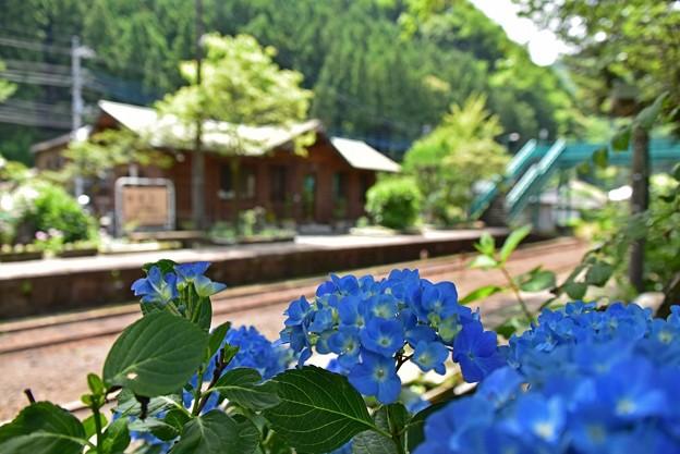 紫陽花咲く沢入駅