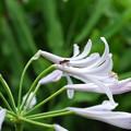 写真: 花と虫