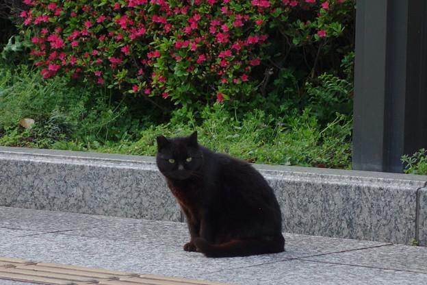 市役所の猫DSC06905