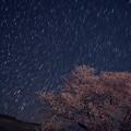 Sakurastar14comp