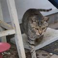 外猫77_DSC2534