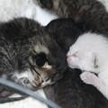 赤ちゃん猫DSC02993