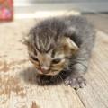 赤ちゃん猫11_DSC00427