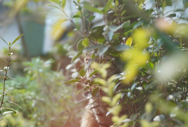 かくれんぼ猫DSC02039_edited