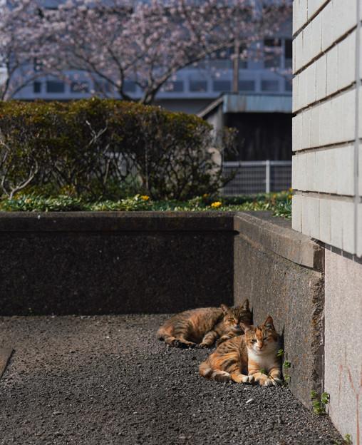 CatsGobo_DSC04882_ed