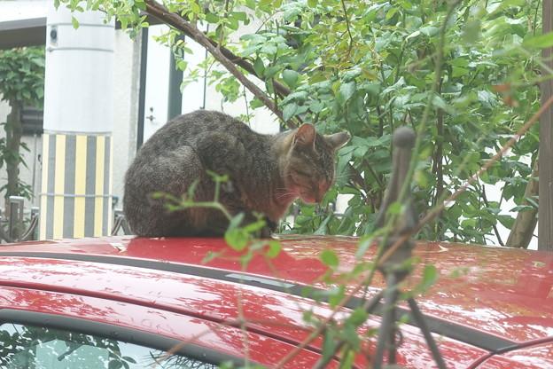 Photos: ナーナー猫DSC02858