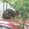 写真: ナーナー猫DSC02858