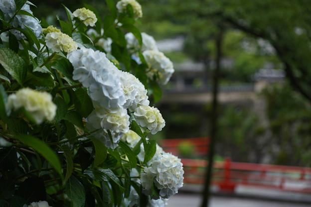 写真: DSC08938