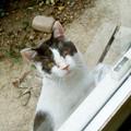 外猫DSC01019_ed