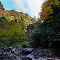 Photos: 赤目-08644