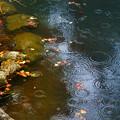 吉城園池2-01724
