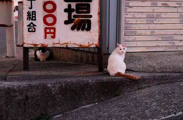 Photos: CatsDSC03928_ed