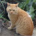 外猫茶トラDSC01871_ed