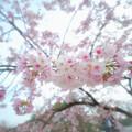 Photos: P1013894_ed