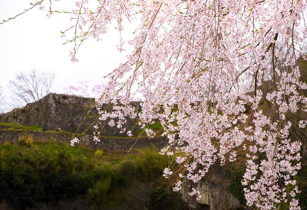岡城枝垂桜-06454