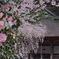 Photos: 五仏堂DSC07419_ed