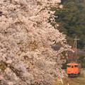 Photos: 大岩駅朝桜P1024792_ed