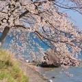 Photos: 海津大崎DSC00001s