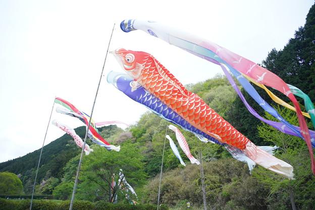 鯉幟DSC02754